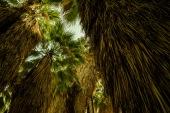 49 Palms Oasis.